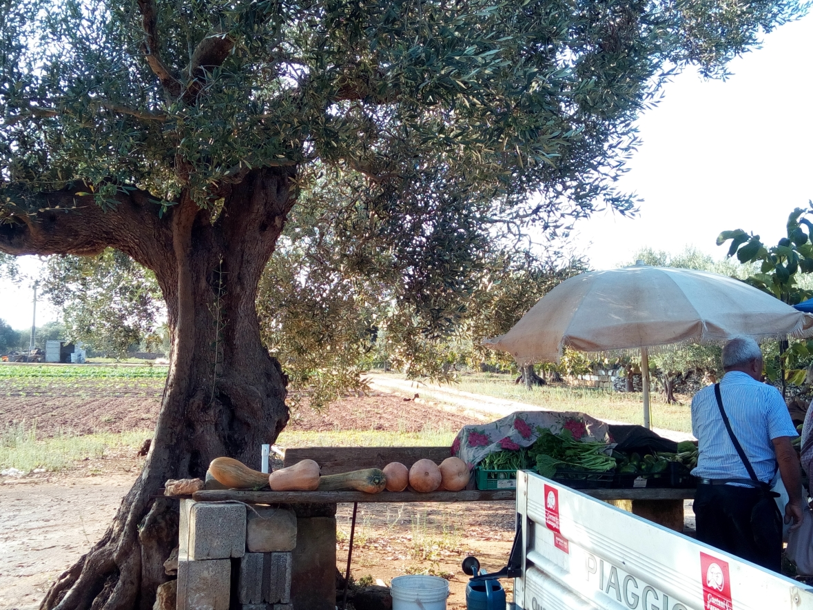 nearby Castrí, you can also by fresh products directly by  the farmer