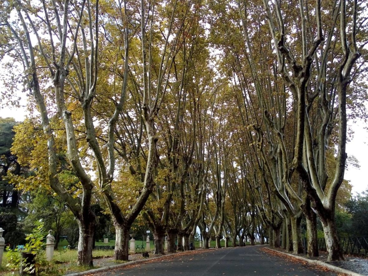 Passeggiata del Gianicolo